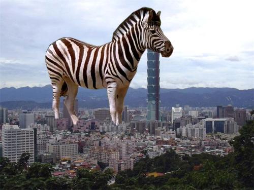 tower-zebra