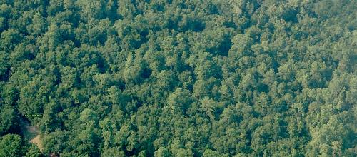 aerialLIVE