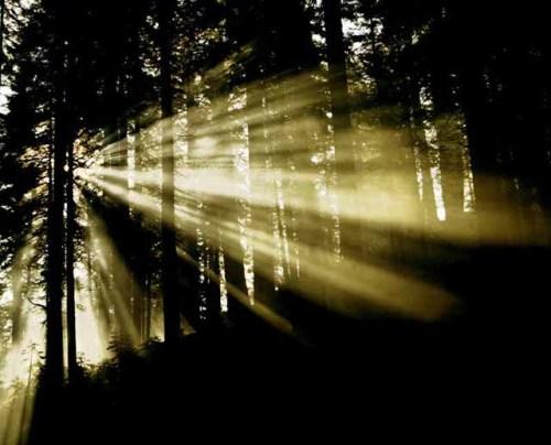 Sun_Rays_Yosemite_Web